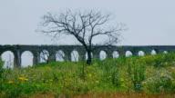 Ancient Aqueduct and dead tree. Landscape, video