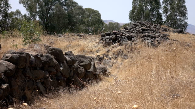 Ancient Rubble of Wall in Overgrown Field in Israel video