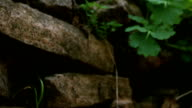 Ancient stone wall with dry and green leafs. video