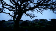 Ancient Tree On Windswept Mountainside video