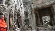 Angkor temple ruins video
