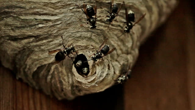 angry wasps video