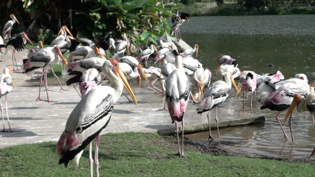 HD: animal bird at zoo video