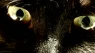 Animal Eye, video