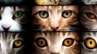 animal eyes video