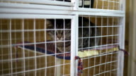Animal shelter, cats waiting for their new owners video