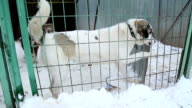 Animal shelter, dogs waiting for their new owners video