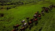 'Animals' Aerial Running horses video
