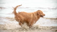 Animals Dogs on the beach (Super Slow Motion) video