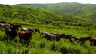 'Animals' Horses video