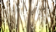 Animated Bamboo Field in a Water Color Style video