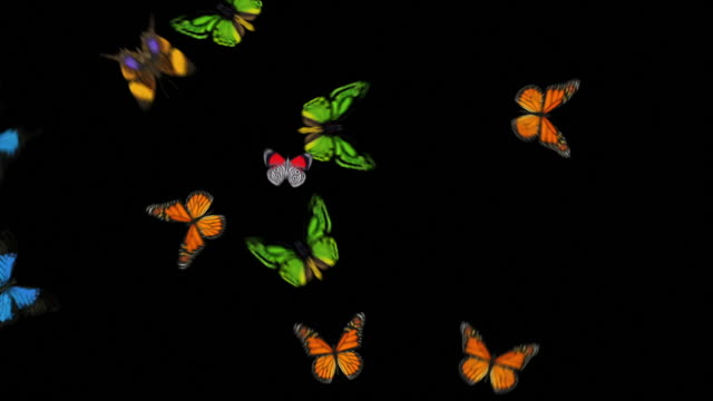 Animated Butterflies Fly In/Out - Mixed Species (With Alpha Variations) video
