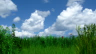 Animated summer meadow with flying butterflies and clouds video