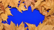 Animated Yellow Leaves video