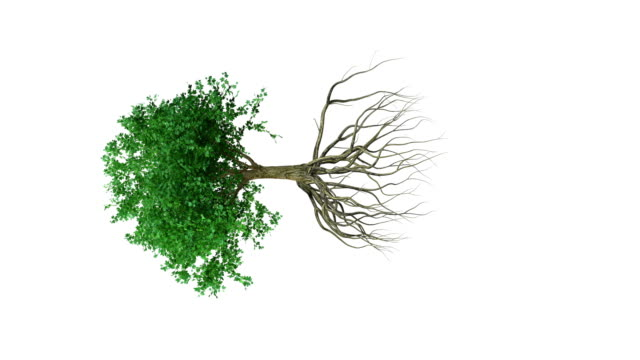 Animation around a colored growing tree with roots video