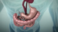 3D animation of the human gastrointestinal tract or GI tract, 4K Ultra HD. video
