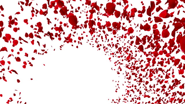 animation red rose petals flying with vortex on white background, love and valentine day video