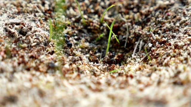 ant ants on nature insects the earth movement works video