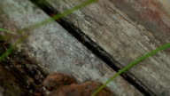 ant running on wood. close-up video