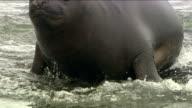 Antarctica Seals HD video