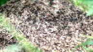 anthill video