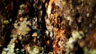 Ants and tree video