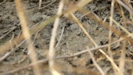 Ants at work Close-Up video