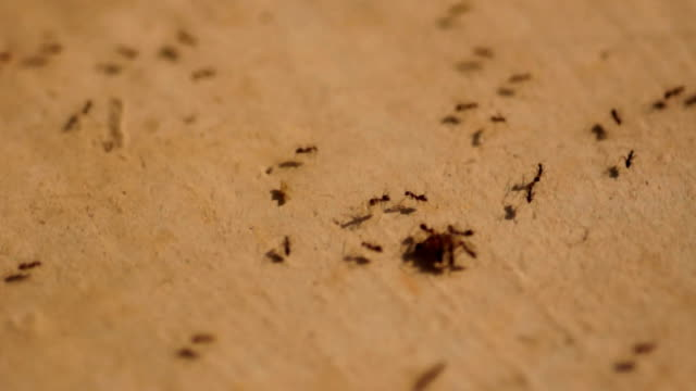 ants carry their foods video