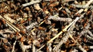 Ants colony video