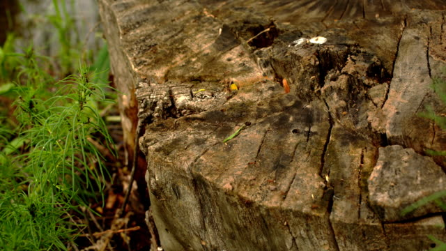 ants crawling on the stump video