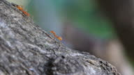 Ants Greeting Each Other HD video