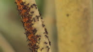 Ants In Action video