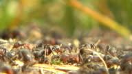 Ants video