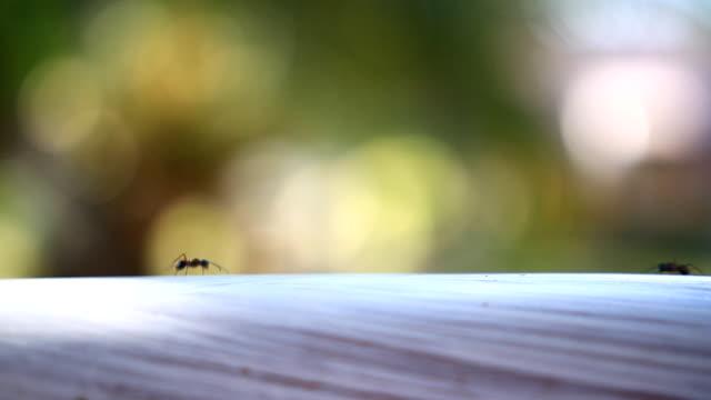 Ants walking on the wooden floor. video