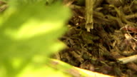 ants working video
