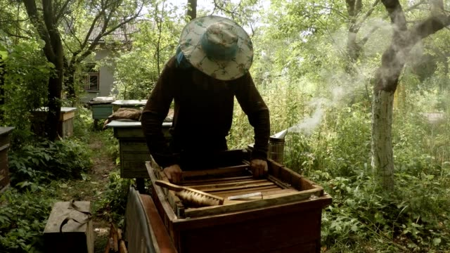 Apiarist Carefuuly Looks For Honey in Hive Bee Smoker Fumes Apiary in Forest video