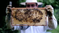 Apiarist holding beehive with bees on it video