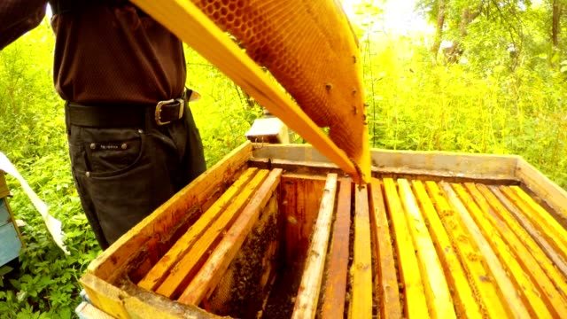 Apiarist Knocks With Brush Bees From Frame For Honeycoms With Honey video
