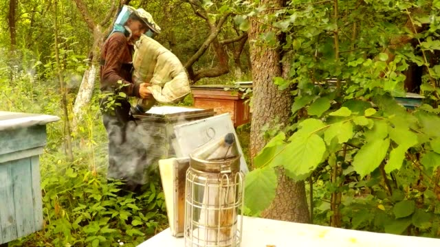 Apiarist Opens Hive And Brings Fumed Bee Smoker in Front of Camera video