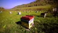 apiary, bee, much hives video