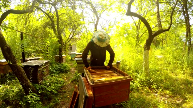 Apiary in Forest Beekeeper Look For Honey in Hive Sun Shines video