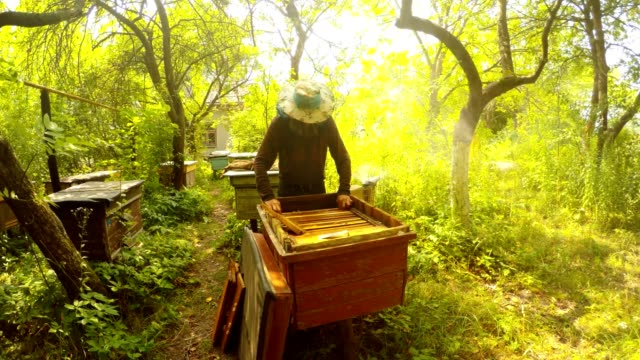 Apiary in Forest Hiver Cleans With Brush Frame For Honeycombs video