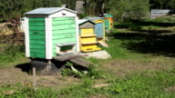 Apiary in garden. Bees flying in colorful bee hives. FullHD video