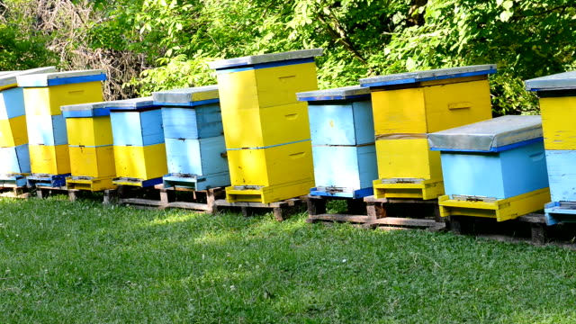 Apiary or Beehive in organic field with bees in summer video