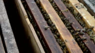 apiculture and beehive video