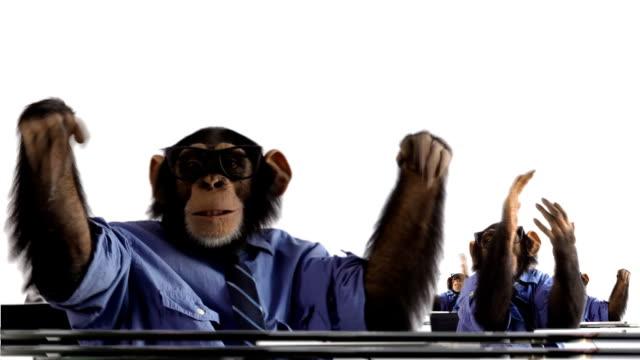 Applauding Monkey Crowd video