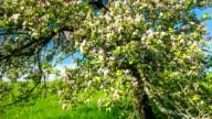 CRANE DOWN: Apple Blossom video