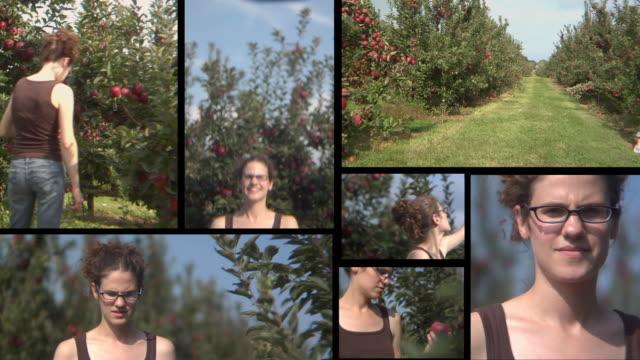HD MONTAGE: Apple Picking video