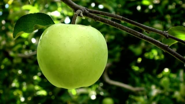 Apple Picking video