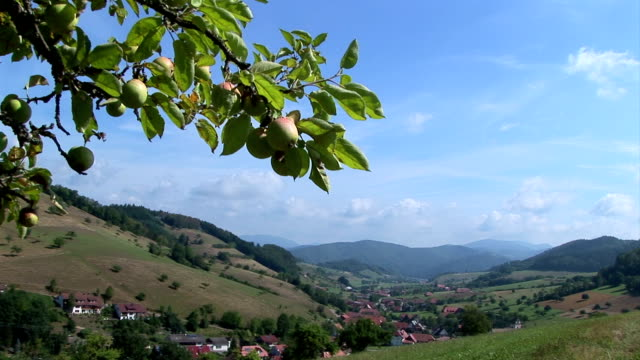 apple tree and valley view video